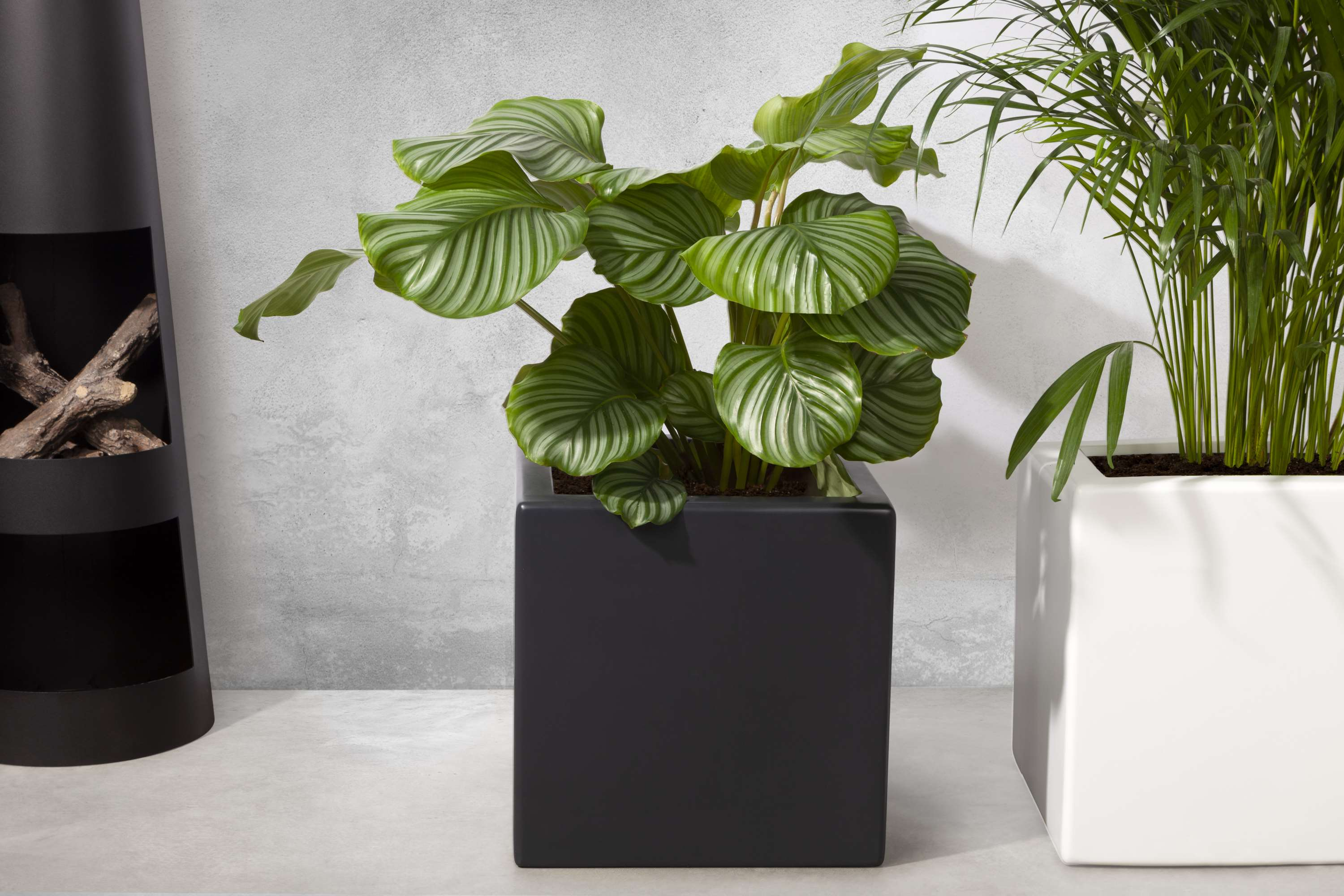 The Enjoyplanter velvet planter - www.enjoyplanters.com or www.polyesterplantenbakken.nl